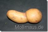 Mollimaus.de